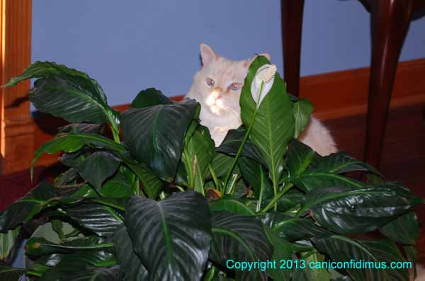 Zoe behind the peace lily
