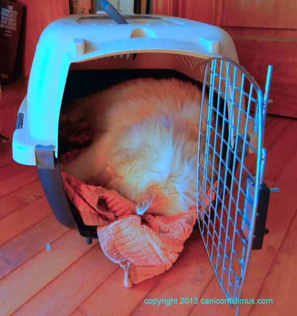 Zoe with his head upside down in his carrier