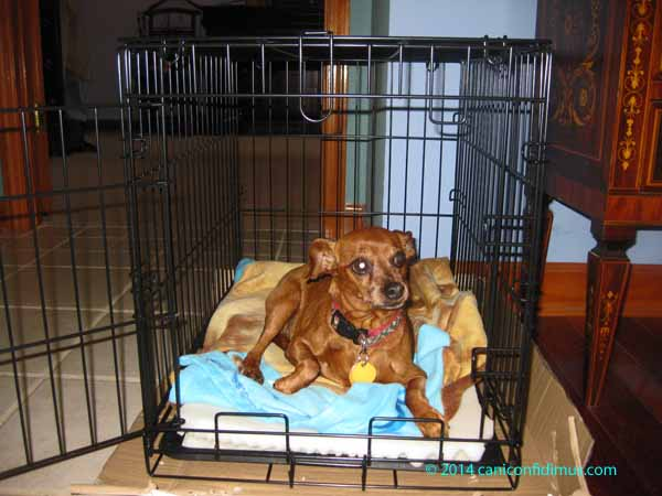lucy in the kennel