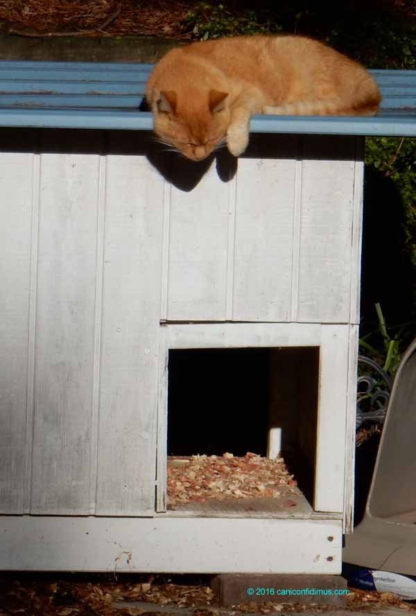 Rusty on her house